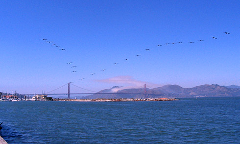 Two Dozen birds flying in formation above San Francisco Bay