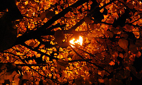 Autumn tree backlit by streetlight