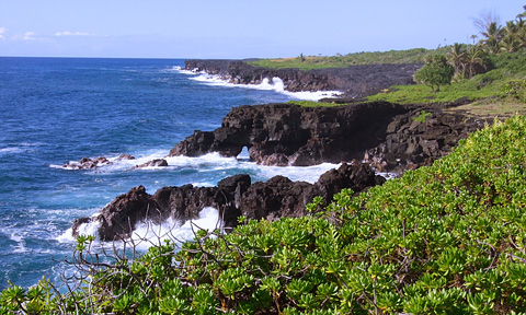 Kalapana Cliffs by patch of Forest