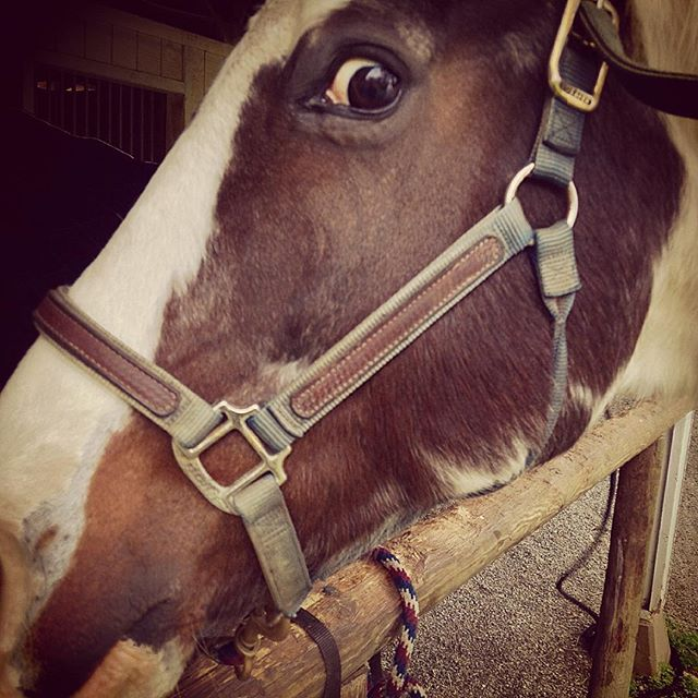 Photo Look Into A Paint Horse S Crazy Eye Andrew M Crusoe