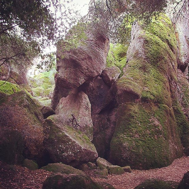 Beautiful mossy rock formations in Pinnacles National Park
