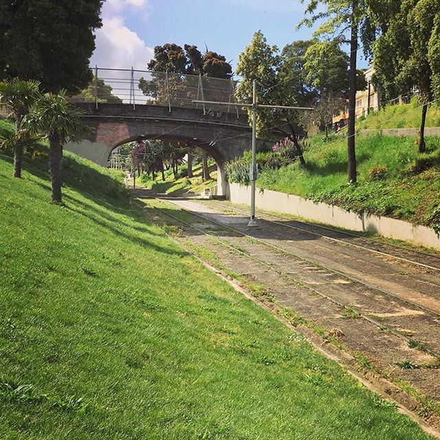 Edge of Mission Delores Park – a little gem within San Francisco