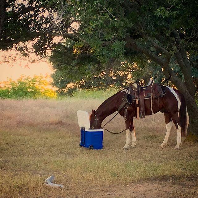 Paint Horse near Folsom Beach