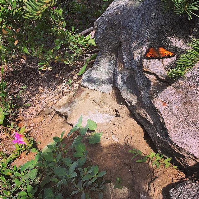 Butterfly by Loch Leven Lakes