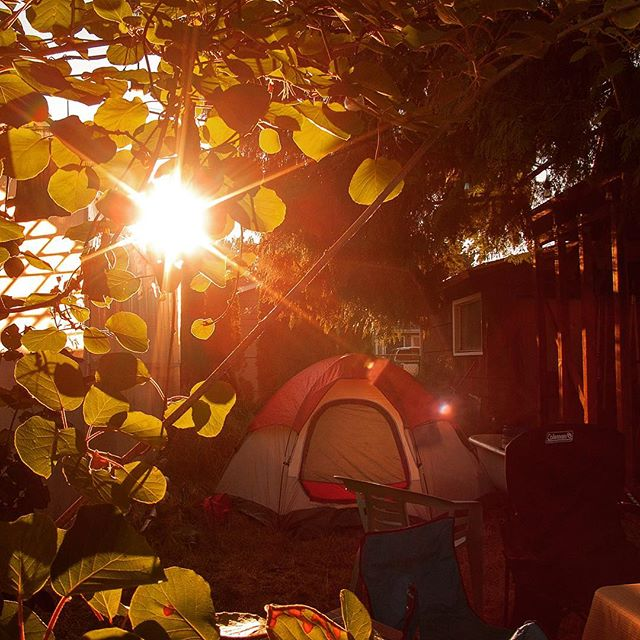 Sun rising behind green leaves and tent - Great American Eclipse