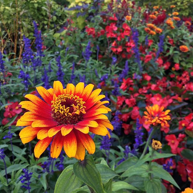 Fiery Blooms at Olbrich Botanical Gardens
