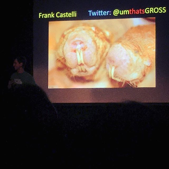 Fascinating Naked Mole Rat presentation by Frank Castelli