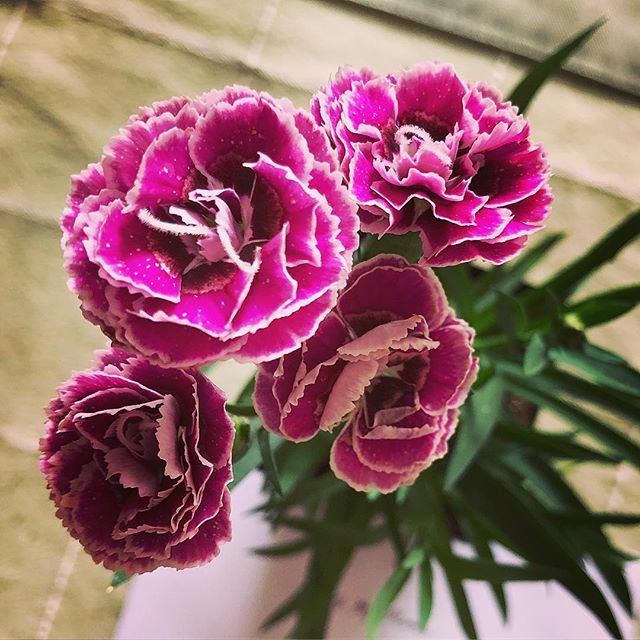 Saying Happy Mother's Day with Purple Carnations
