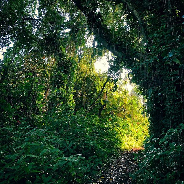 Sunset Light on Jungle Path (Carlsmith Beach Park, Hilo, HI)