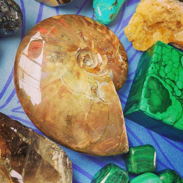 Nautilus Shell and Minerals for Sale at Uncle Robert's Night Market in Kalapana