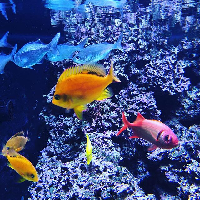 Fish in an aquarium in Hilo Hawaii