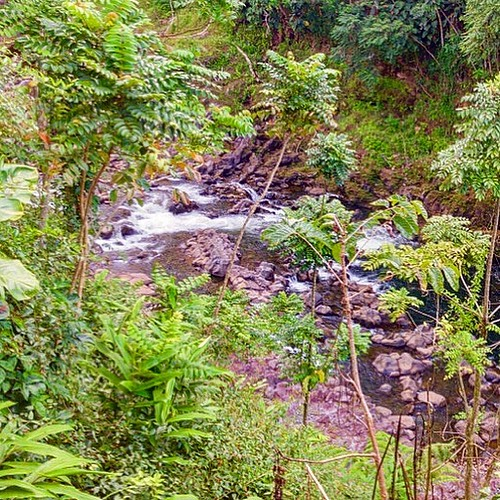 Wailuku River from a Secret Spot in Hilo