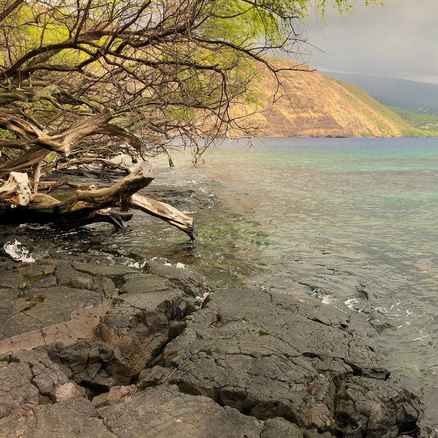 Kealakekua Bay by Cook Monument