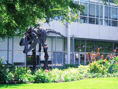 T-Rex skeleton on Google Campus (front)